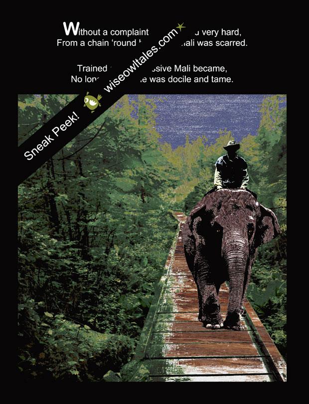 Mali – A Rescued Asian Elephant Tale